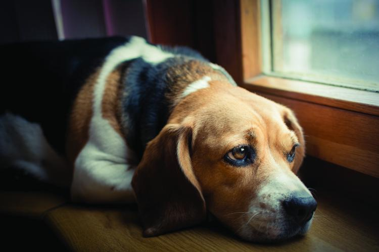 Prevention of Animal Cruelty Month