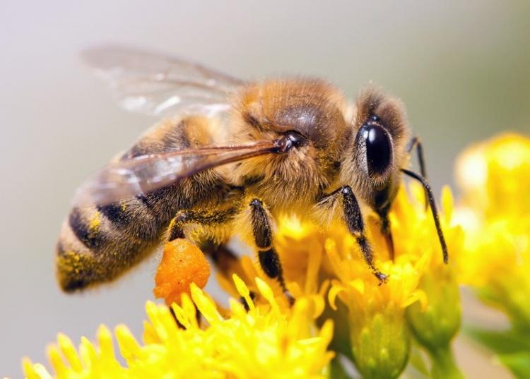 National HoneyBee Awareness Day