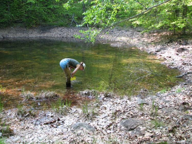 VERNAL POOL DISCOVERY