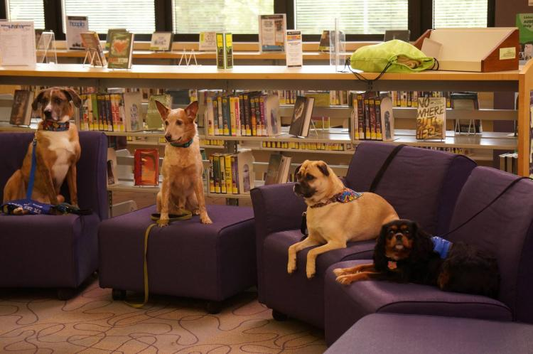 Love On A Leash at Noblesville Library