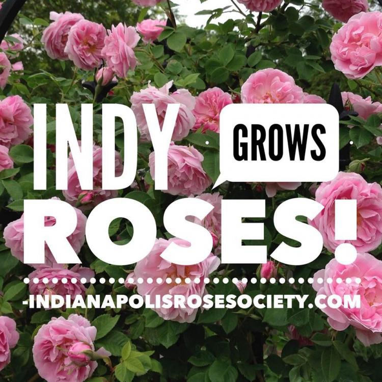 Indianapolis Rose Society District Meeting & Rose Show at Boone Co. Fairgrounds