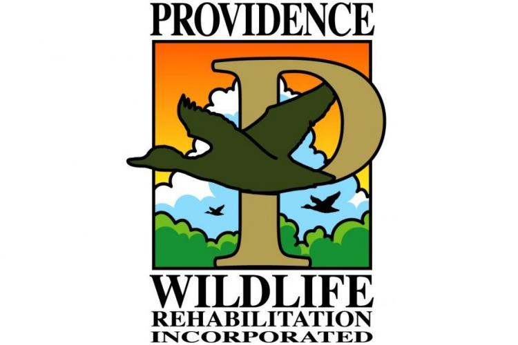 Providence Wildlife Rehabilitation - Educational Sessions in Westfield