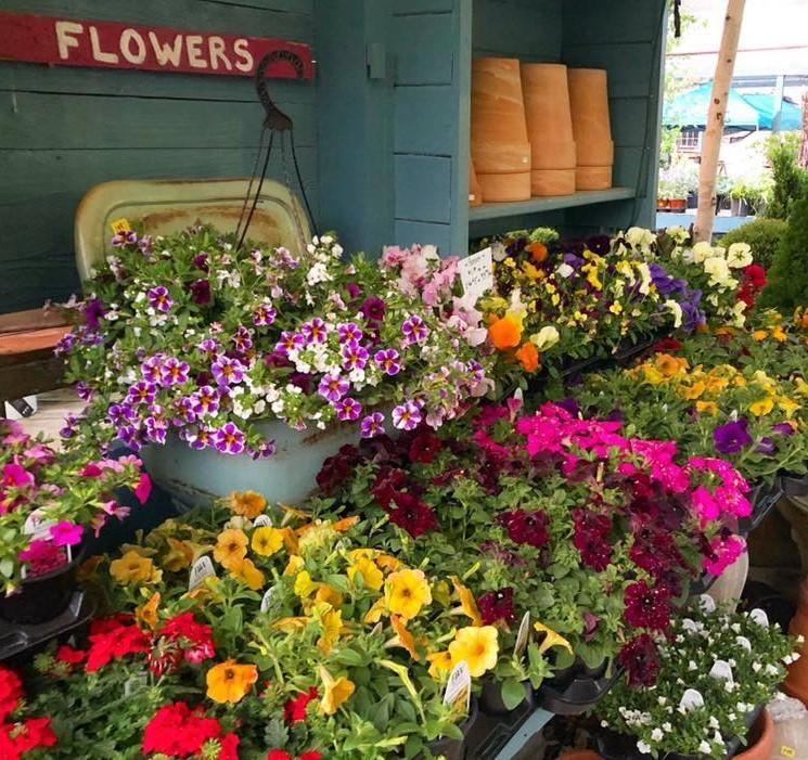 Mother's Day Flowering Baskets & More at Geist Nursery in Fishers