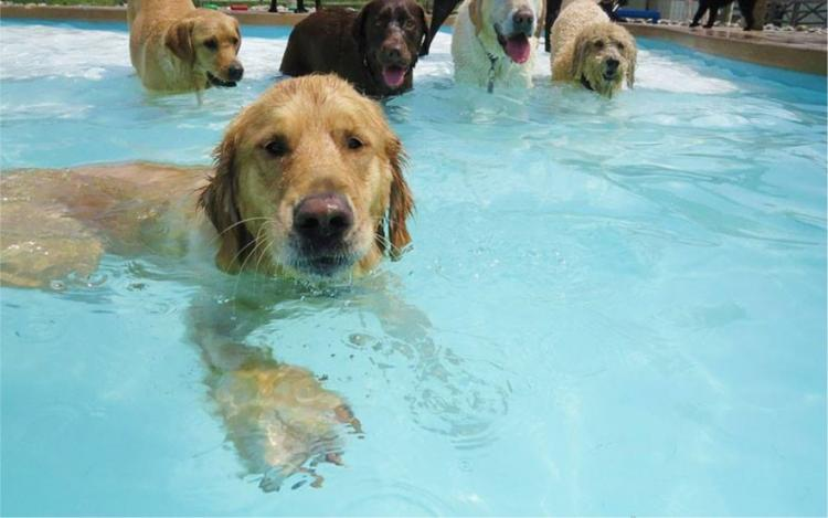Pups in the Pool at Witham Family YMCA