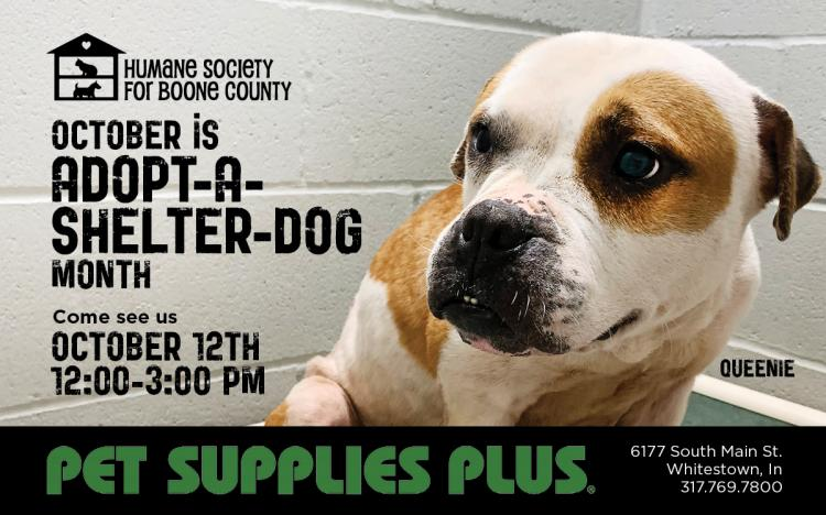 Humane Society for Boone County Adoption Event - Whitestown
