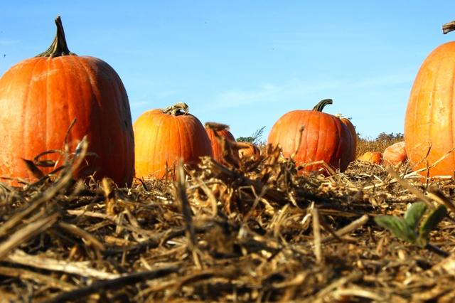 Pumpkins, Mazes, Apples, & Hayrides!