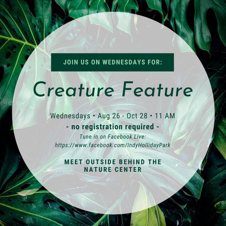 Creature Feature at Holliday Park