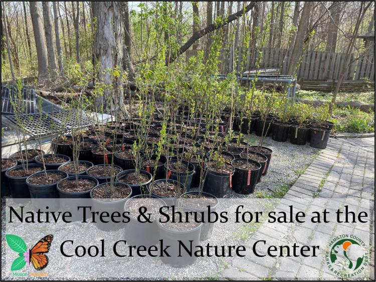 Native Trees & Plants for Sale at Cool Creek Nature Center