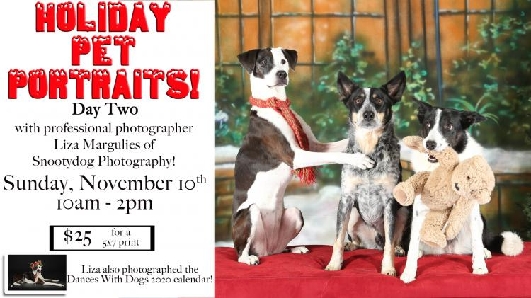Holiday Pet Portraits at Humane Society of Westchester (Day Two)