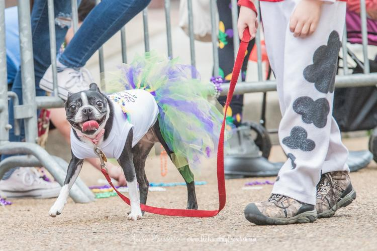 Krewe des Chien Parade for Dogs