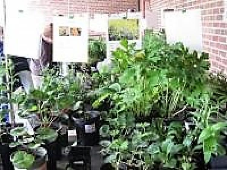 Plant Sale:  Gardeners of Central Lake County Garden Club
