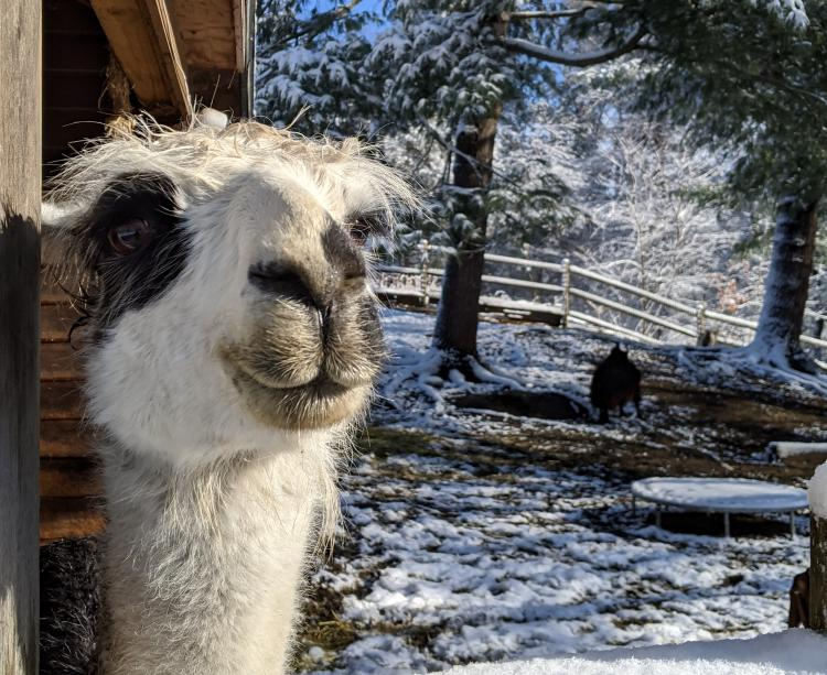 Winter Solstice Tour with the Animals at Unity Farm Sanctuary