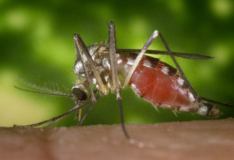 Monthly Lecture Series:  Vector-borne Disease Ecology and Mosquitoes & Ticks in