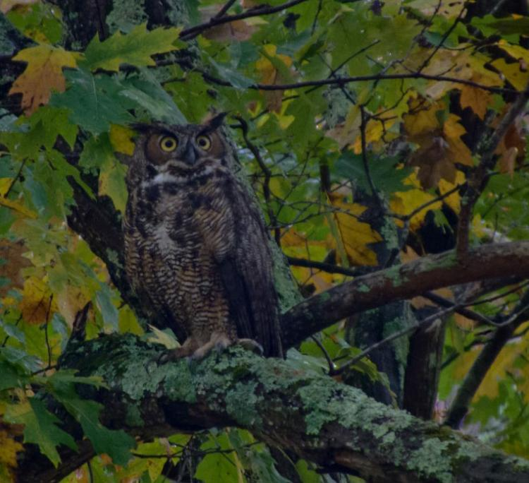Full Moon Owl Prowl for Adults