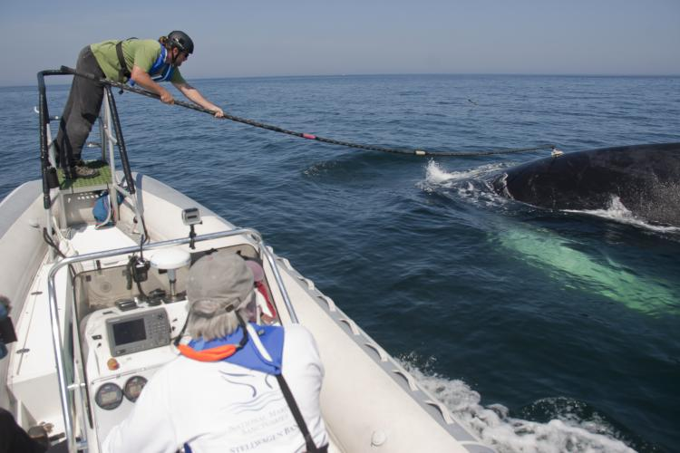 Nature On Tap... What's Up Below: Exploring the Underwater Behavior of Humpbacks
