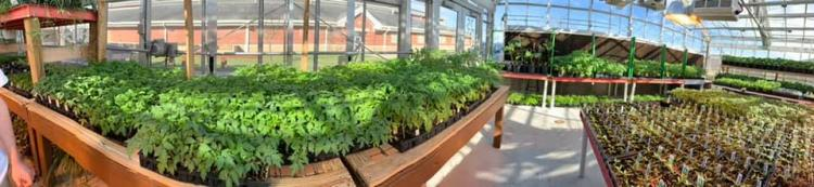 Franklin FFA Plant Sale