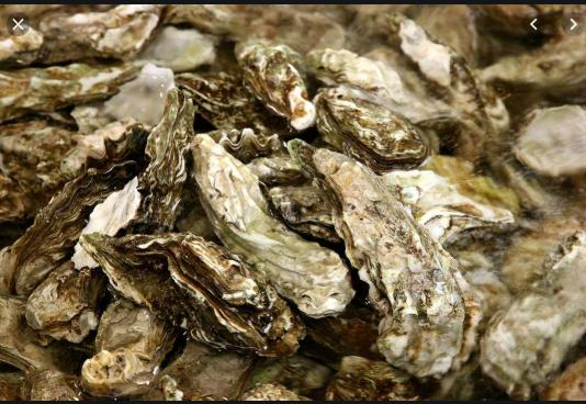It's Oyster Season at Graham's Landing in Murrells Inlet!
