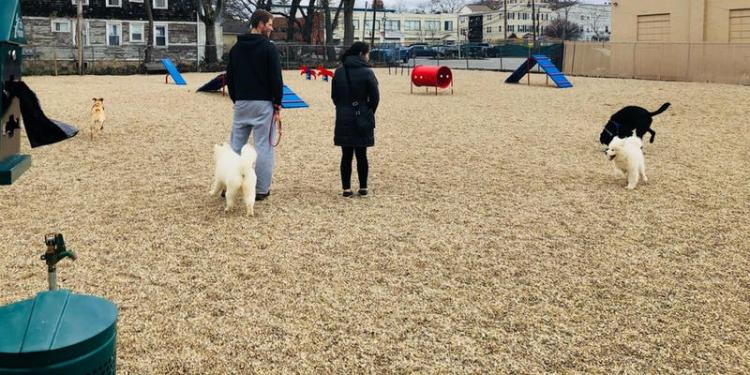 Dog Training with Wagmore in Harbor Point Dog Park