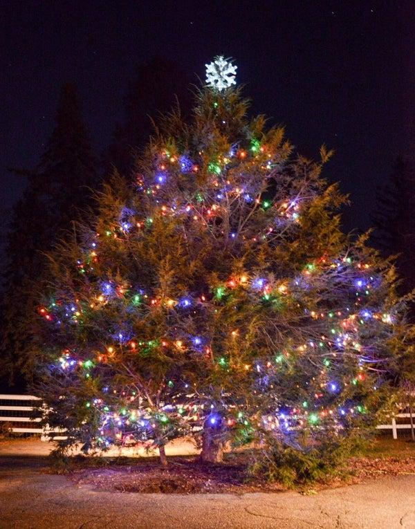 Wakeman Town Farm Christmas Tree Sale - One Day Only!