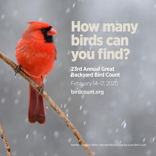 Great Backyard Bird Count at Cos Cob Library