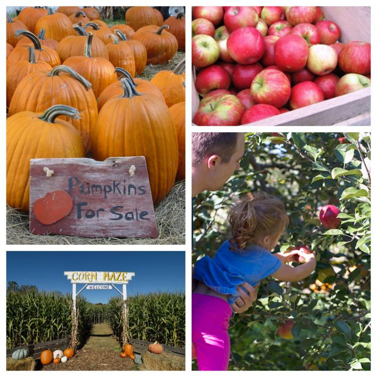 West Metro Pumpkin Patches, Corn Mazes and Apple Orchards!