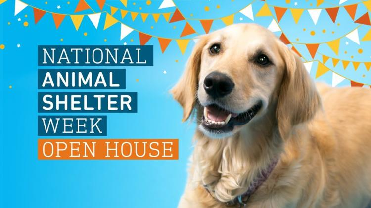 Golden Valley - Animal Humane Society's Open House