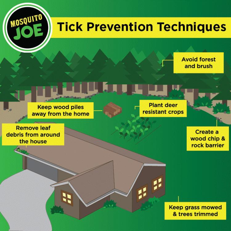 Tips for Preventing All-Year Round Ticks