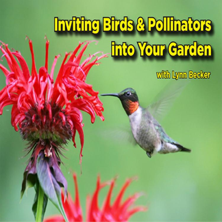 Inviting Birds and Pollinators into your Garden with Lynn Becker