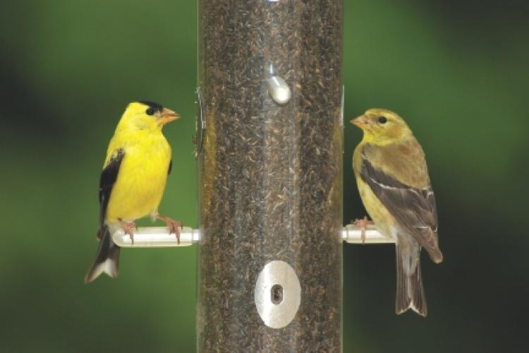 Wild Birds Unlimited In-Store Program: Feeding Goldfinches