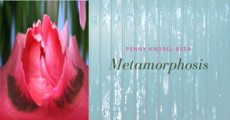 Penny Knobel-Besa: Metamorphosis