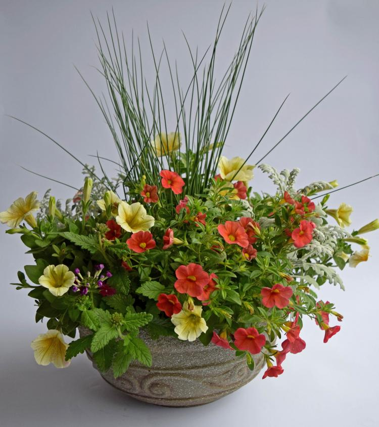 Spring Container Gardens at Pike Nurseries