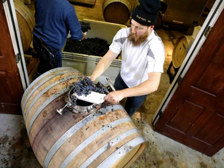 Fullerton Wine Course: Winemaking in the Winery
