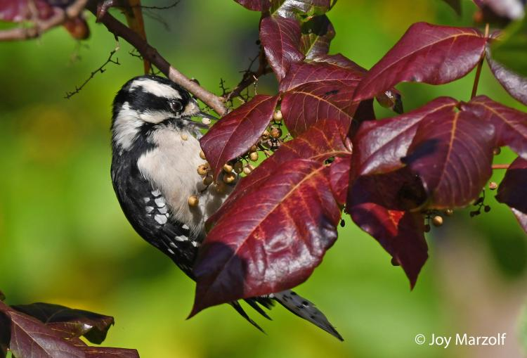 Webinar: Tips for Fall Nature Photography