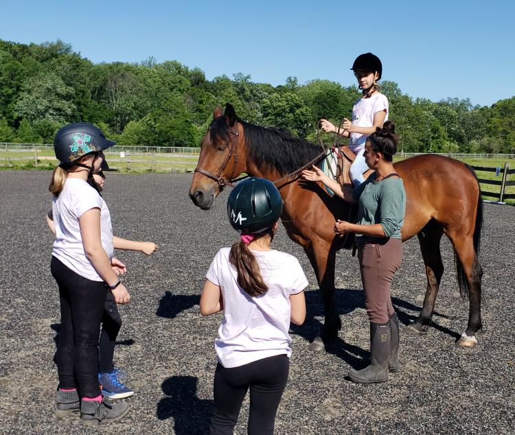 Equestrian Summer Camp at Seaton Hackney Stables