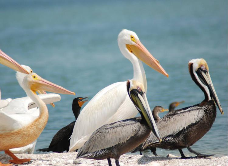 Charlotte Harbor Aquatic Preserves Nature Boat Tour Ecotour