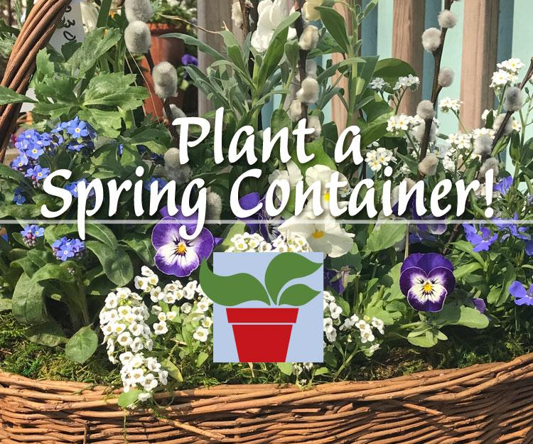 Plant a Spring Container