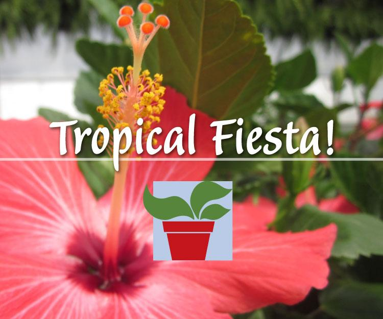 Tropical Fiesta!