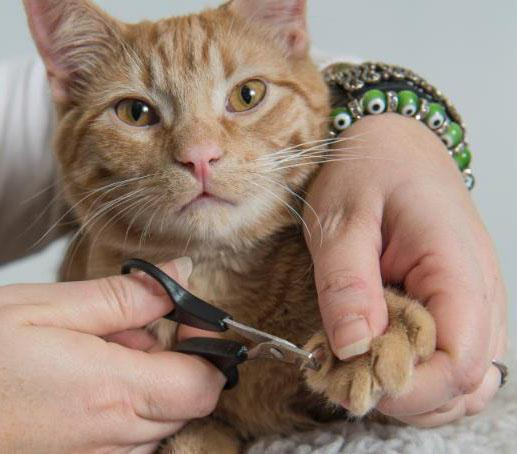 Cancelled - Feline Rescue Cat Claw Clipping Clinic