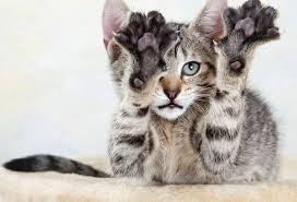 Cancelled - Feline Rescue Cat Claw  Clipping Clinic - Woodbury