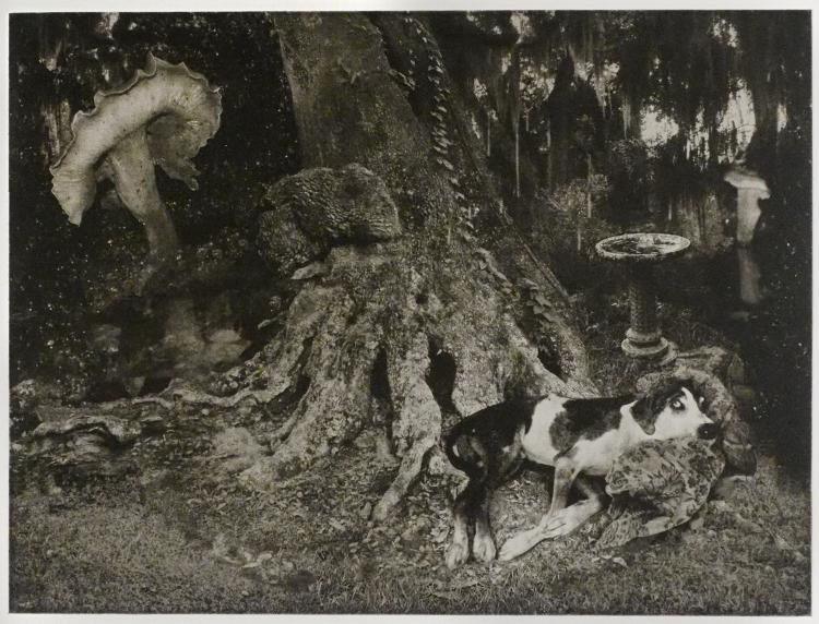 Wild Trees: Photo Etchings and Paintings by Lynda Frese