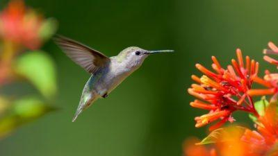 Know to Grow: Attract Birds with Plants & Products