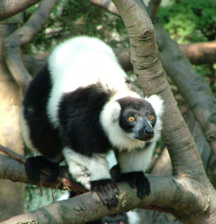 Enjoy the Akron Zoo for Free on Community Days!