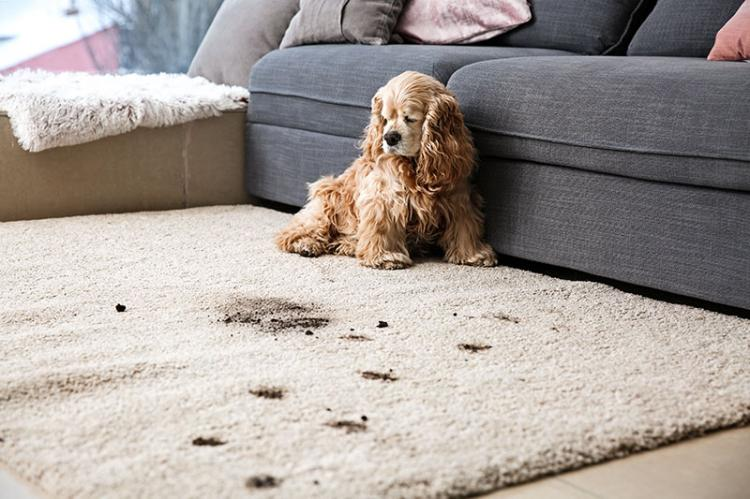 FREE carpet cleaning for Brecksville Families