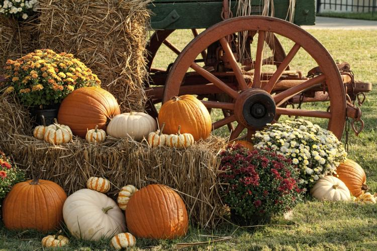 Pumpkins, Fall Festivals, Zoos, Farms and Orchards!!