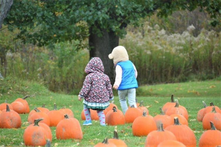 Fall into Nature 2020: Discover Bath Nature Preserve - All of October