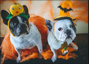 Enter Your Pet in Cutest Halloween Pet Contest & Win at Pet Dr. Doggie Daycare