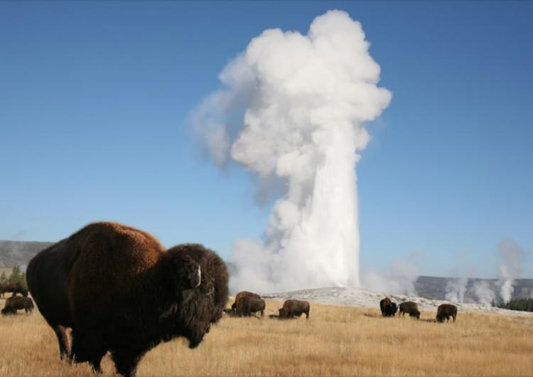 YELLOWSTONE WEBCAM - OLD FAITHFUL