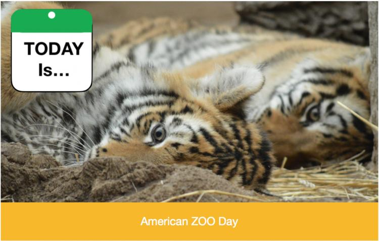 TODAY Is: American Zoo Day