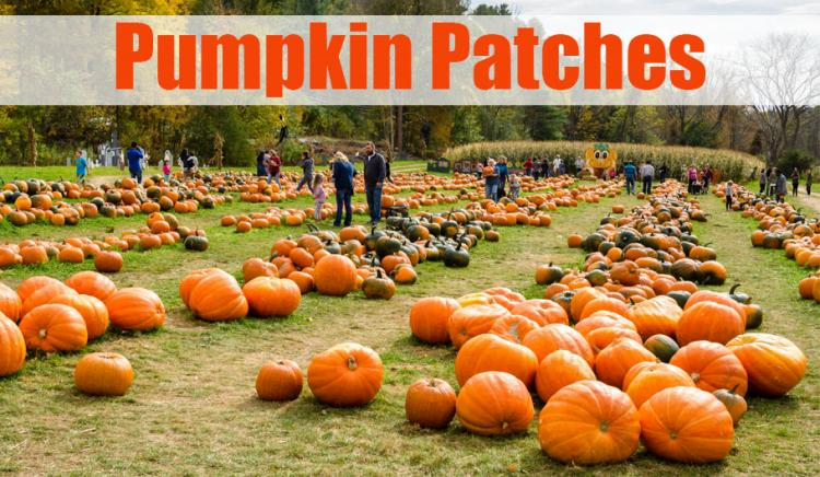 Pumpkin Patches In Northwest Indiana 2019