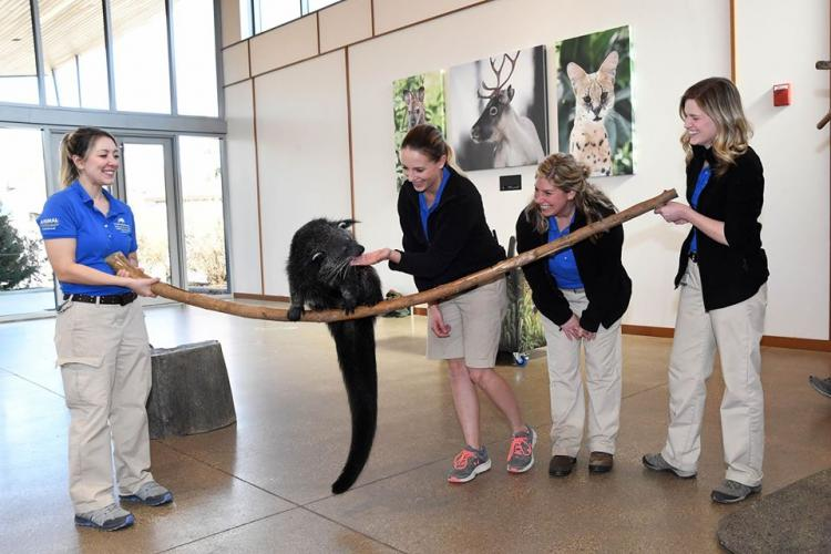 Virtual Field Trips to the Zoo and More